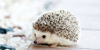 hedgehog-468228_1280 - Район Даниловский ЮАО Москвы